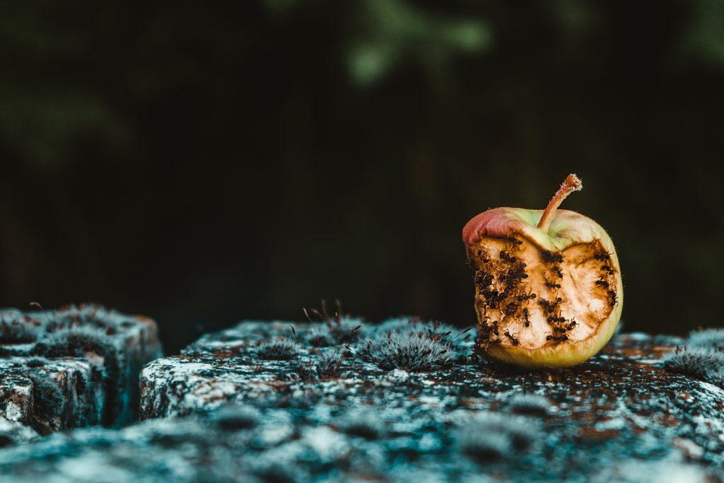 腐ったリンゴ
